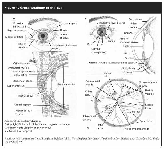 Ophthalmology crashing patient australian eye manual ccuart Image collections